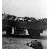 Corpses of prisoners loaded in a truck bed  [Ohrdruf]