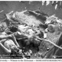 A group of liberators looks at the corpse of a naked, emaciated prisoner laid next to the corpses of two SS guards (1)  [Ohrdruf]