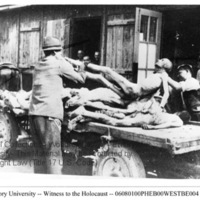 Two civilians load the corpse of a prisoner onto a horse-drawn cart  [Ebensee]