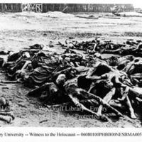 Piles of decomposing corpses of prisoners in a field [Bergen-Belsen]