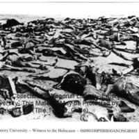 Corpses of prisoners at Bergen-Belsen